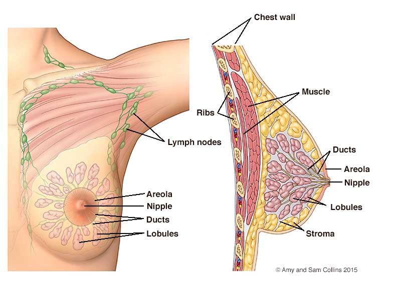 καρκίνος μαστού φωτό